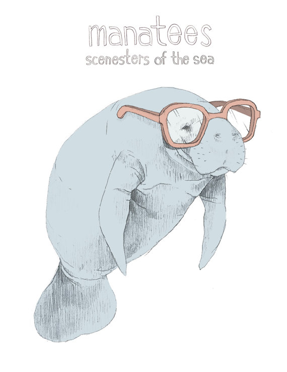 Manatee: Scenester of the Sea